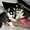 Очаровательны Сибирский хаски Щенки для продажи #1265170